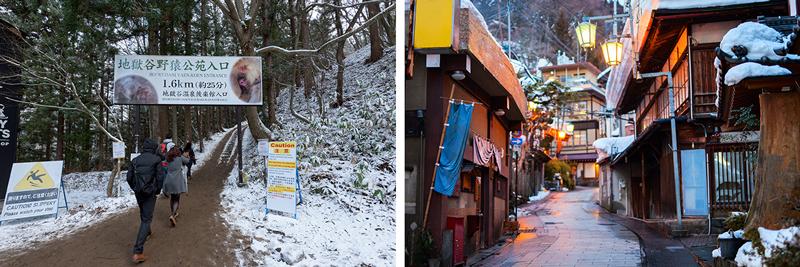 Snow Monkey Park - Shibu Onsen